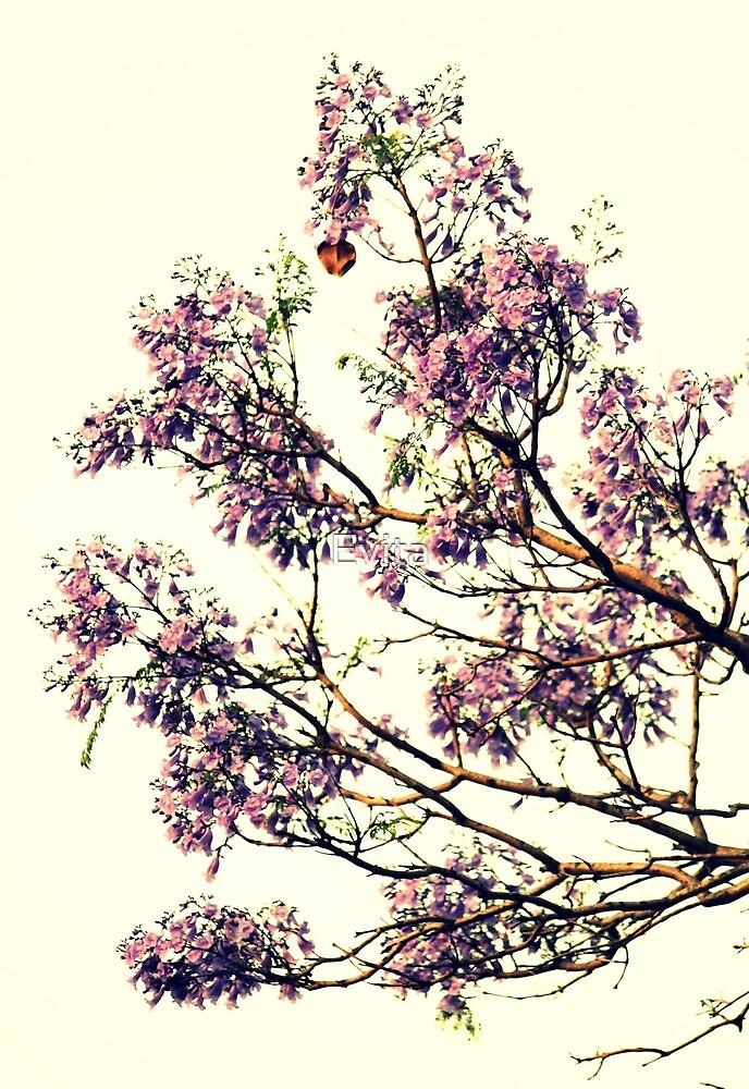 Jacaranda-Blumen von Evita