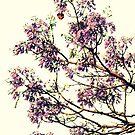 Jacaranda Flowers  by Evita