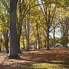 KENTUCkY TREES by Pauline Evans