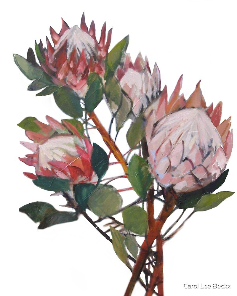 A Bunch of King Proteas  by Carol Lee Beckx