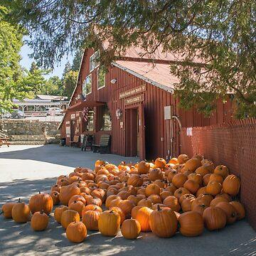 Pumpkins For Sale by CarolM