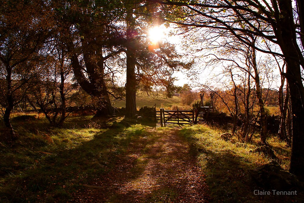 Light Through the Trees by Claire Tennant