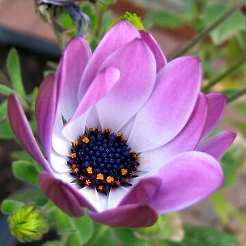 Flower Rejoicing by kathrynsgallery