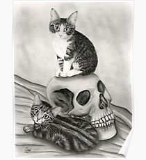Witch's Kittens Skull Tabby Cats Poster