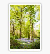 Bluebell Woods in Spring Sticker