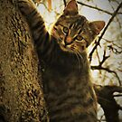 Tree Climber  by lorilee