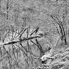 Old Man Winter by Ann Eldridge