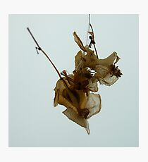 Dry flower 1 Photographic Print