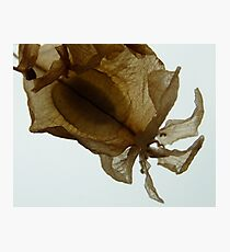 Dry flower 2 Photographic Print
