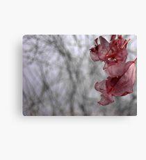 Dry flower 10 Canvas Print