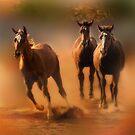 Three Horses by socalgirl