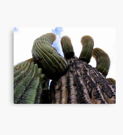 Sonoran Scenery Series ~ 1 Canvas Print