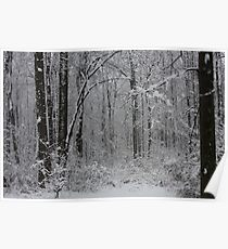 First Snowfall Of The Season In The Woods- 09 Poster