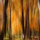 Magical Forest by Kelly Cavanaugh