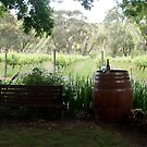 After 5 - Magpie Springs - Adelaide Hills Wine Region - Fleurieu Peninsula - South Australia by MagpieSprings