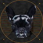 Frenchie by Apatche Revealed