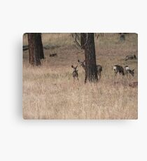 Moss Eaters Canvas Print