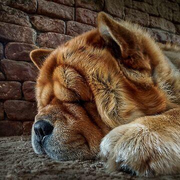 Sleeping dog by Blauer