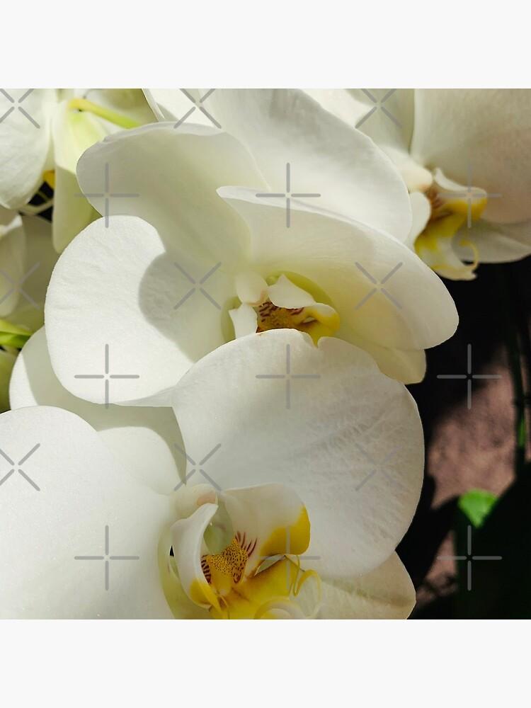 Delicia de orquídeas de MariaKardia