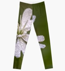 White cockle covered by raindrops Leggings