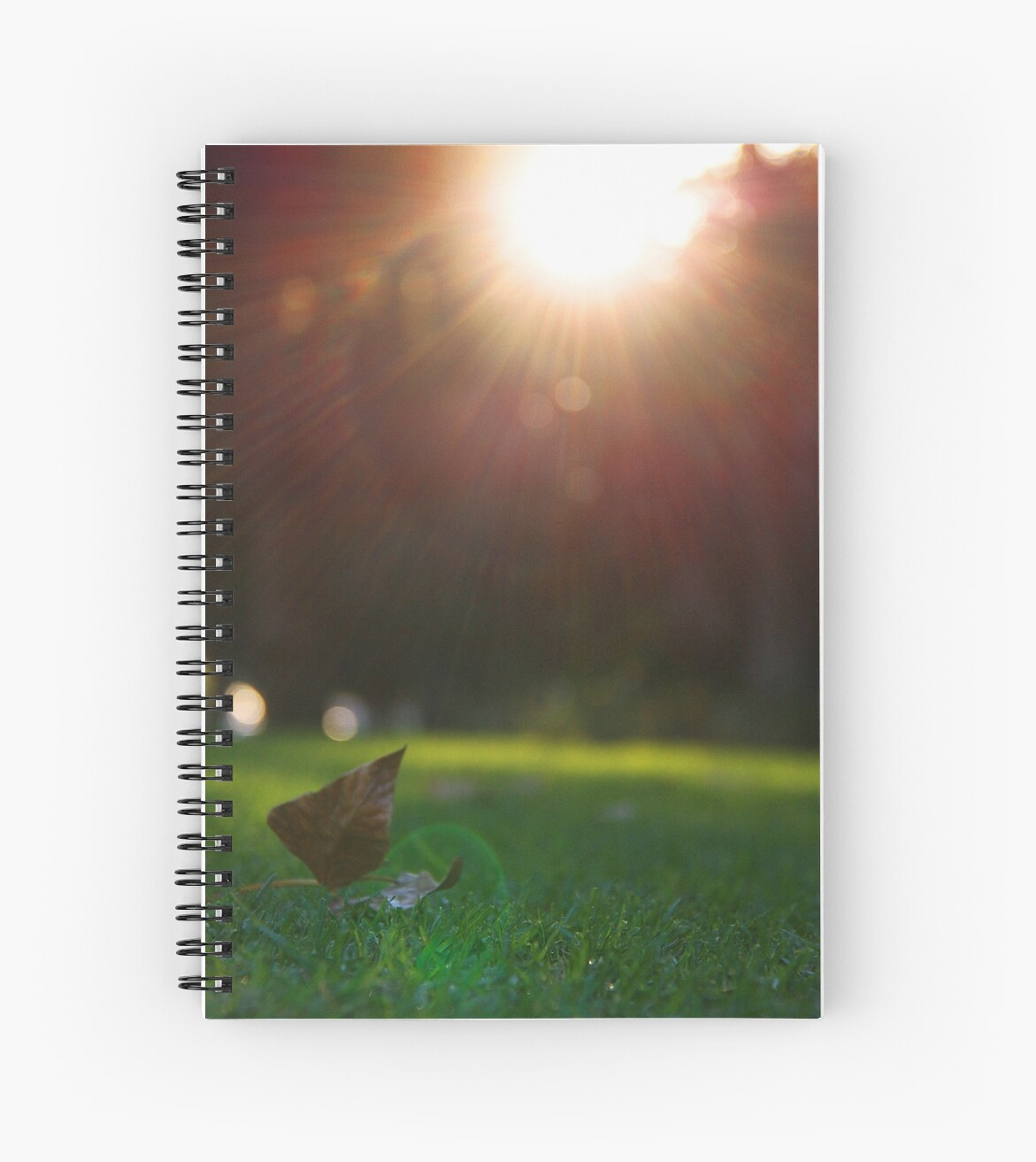 Grass and Sunshine - Hyde Park by Boxx