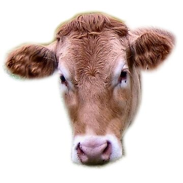 JERSEY COW  by Shoshonan