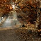 Colzium Path Rays by Cat Perkinton
