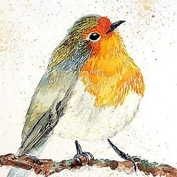 Cheeky little Red Robin by rrandj