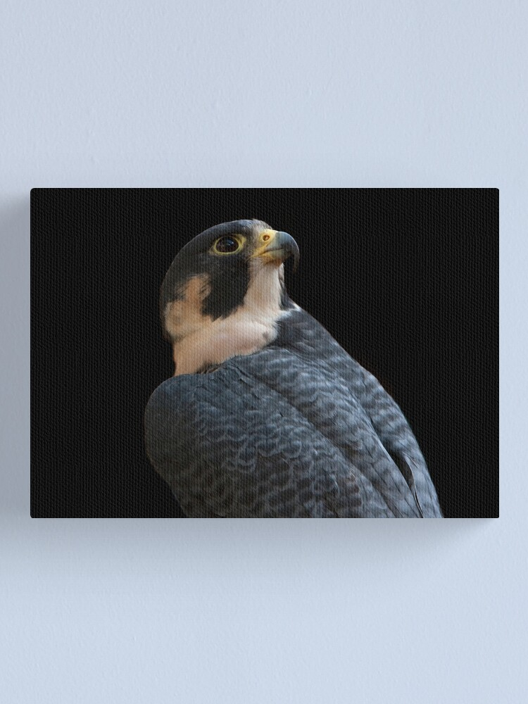 Alternate view of Peregrine Canvas Print