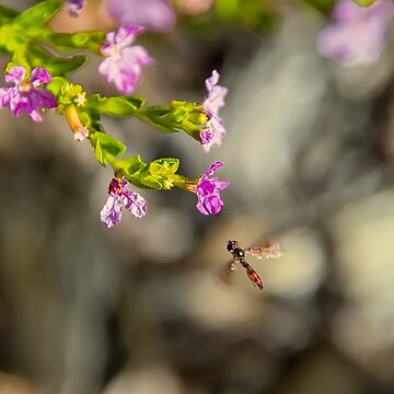 Bug approaching flowers by imagetj