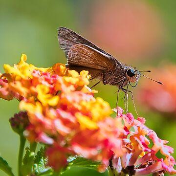 Moth Closeup by imagetj