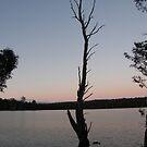 Lone Tree by Lenny36