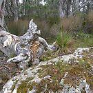 Fallen Tree by Lenny36