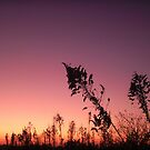 Night Comes Softly Falling by J J  Everson