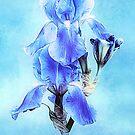 Iris Pair In Blue by Anita Pollak