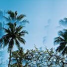 Psychedelic Palms in Cairns by msangiemoon