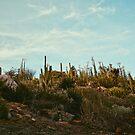 Cacti at San Diego Zoo Safari Park (Wild Animal Park) by msangiemoon
