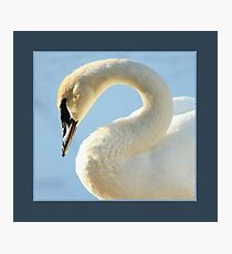 Matted Gracefull Swan Photographic Print
