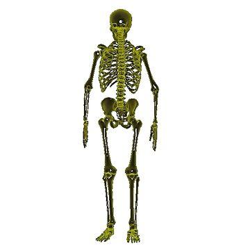 X ray skeleton  by BigRedDot