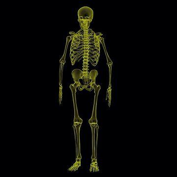 X-ray skeleton 2 by BigRedDot
