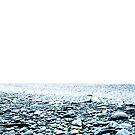The stony Beach.....South Island of New Zealand by Imi Koetz