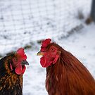 Henpecked? No Way! by Kasia-D