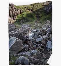 Ptarmigans on Rocks, Go∂afoss, Iceland Poster