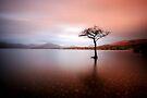 Milarrochy Bay, Loch Lomond by David Mould