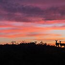 Red Deer silhouette against a fiery Peak District sunset by Chris Warham