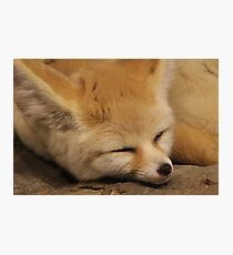 Sweet, Sly Dreams  Photographic Print