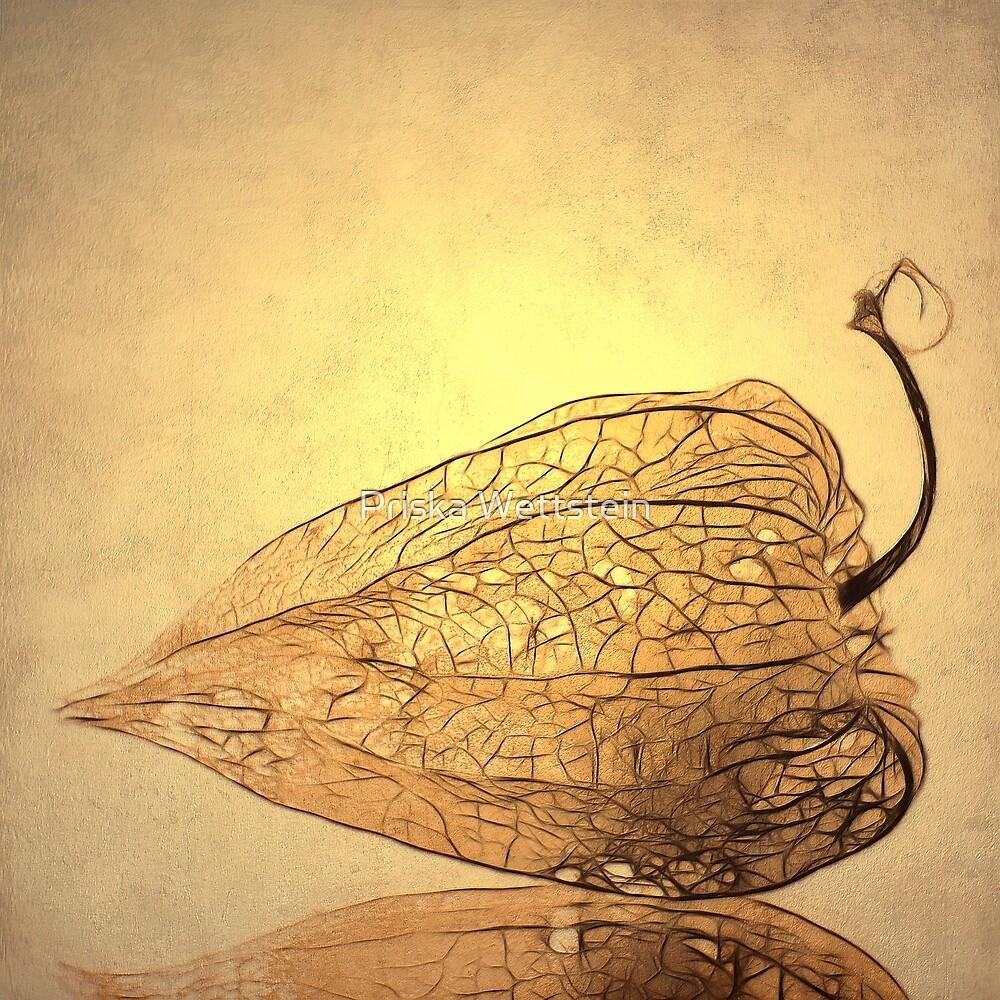 Physalis by Priska Wettstein