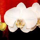 Schönheit in Weiß von Milena Ilieva