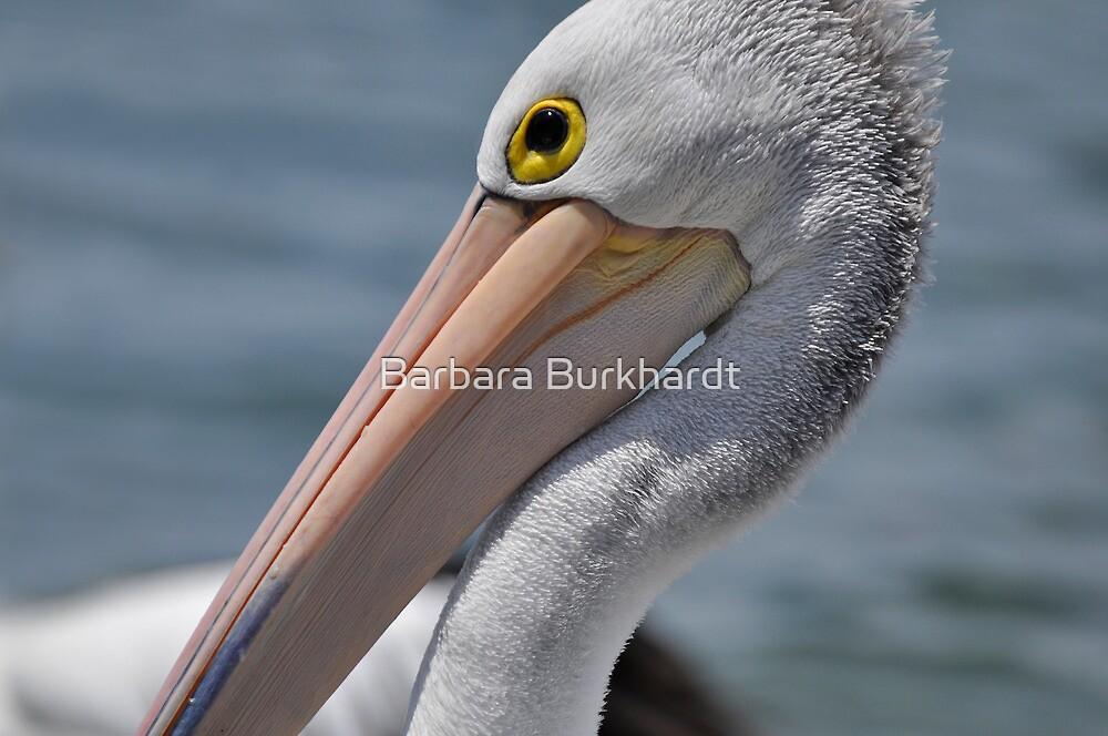 The Eye of the Beholder - Pelican by Barbara Burkhardt