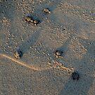 Turtles 2 by JMerriman